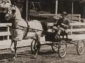 ALYF #1465 (Ronek x Fath, by *Rodan) 1938 grey stallion bred by General J.M. Dickinson; sired 75 registered purebreds