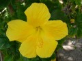 DSCN5882  a flower blooms in weed filled lot
