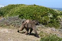 Cape Point (39)