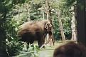 1995 Bronx Zoo 09