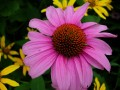 gardens 054