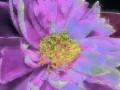 Flower Service 062e