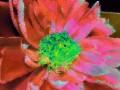 Flower Service 062h