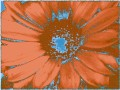 Flower Service 066f