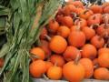 Pie Pumpkins and Corn Stalks