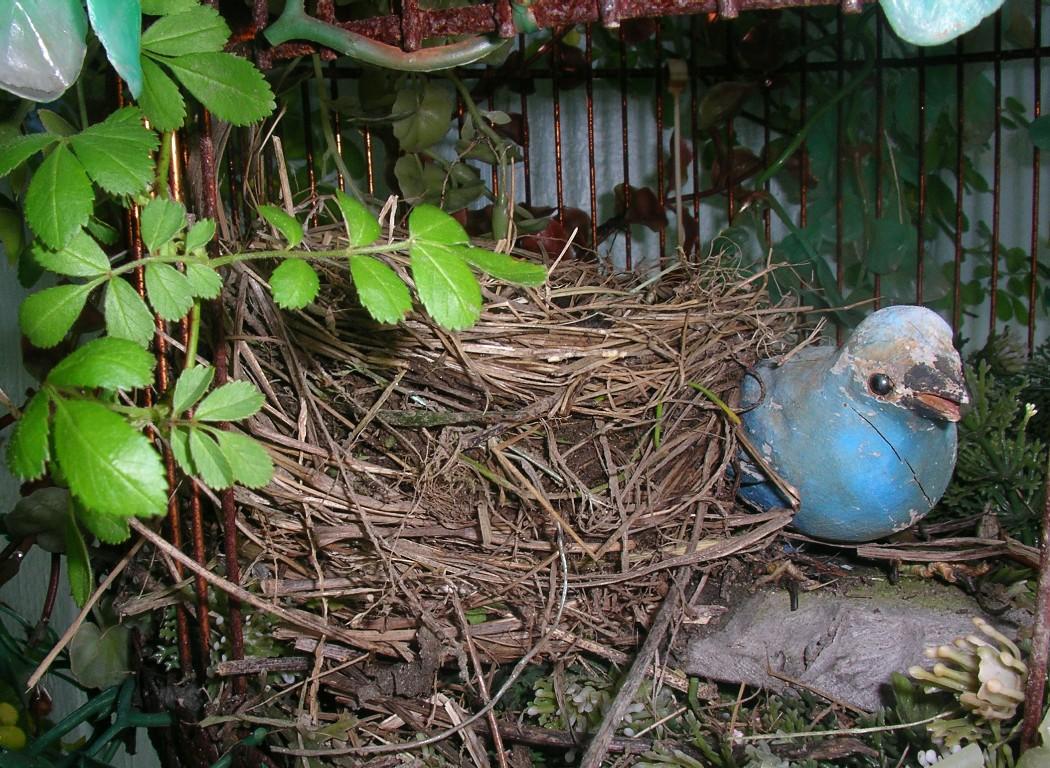 robin nest IMGP3913