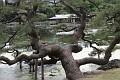 Tokyo - Hamarikyu garden