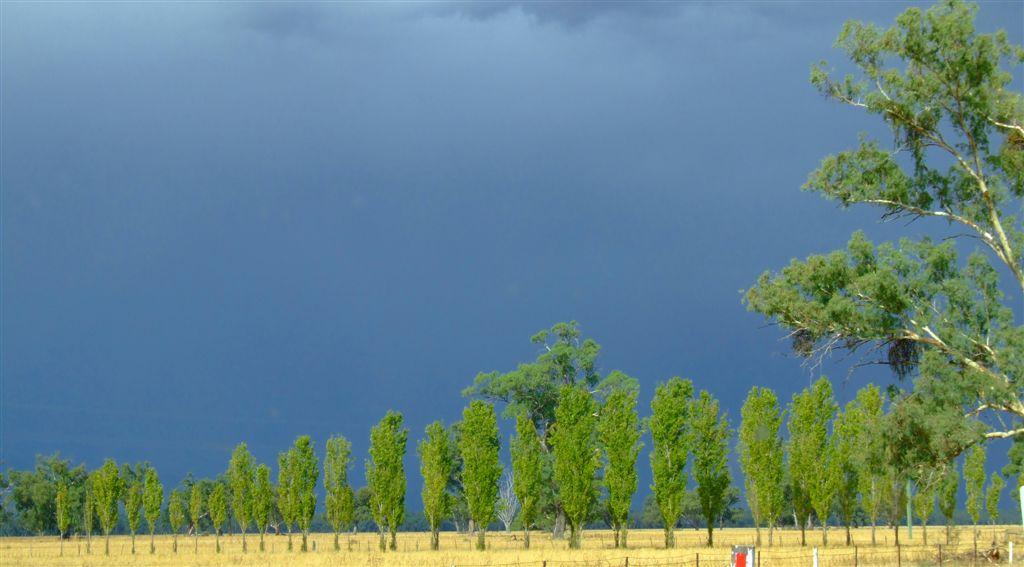 Storm poplars