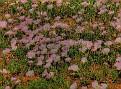 Tooraweena flowers 002