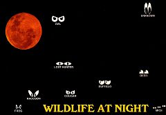 Wildlife at Night
