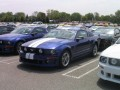 Roush Mustangs  0013