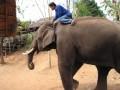Elephant Camp near Chaing Mai, Thailand.