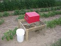 This is a home made compost apparatus.  All my kitchen scraps and organic wastes go here each day to make really good new planting soil.