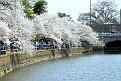 Cherry Blossom Fest 2014 011