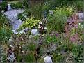 DSCN1552 Plantedammen 05 08 12