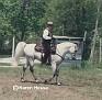 KNA ANWAR FALCON #312488 (Amurath Falcon x Bint Mint Julep, by Serr Bruk) 1984 grey stallion owned by Ron & Debbie Stehle