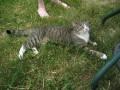 Grass Kat w/Cynthia's feet