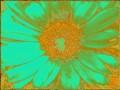Flower Service 066g