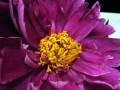Flower Service a