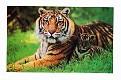 04- Bangladesh National Animal