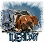 1Tuesday-blujeanpup