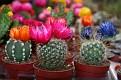 Garden Centre Cacti (6)