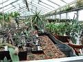 018 Petr his greenhouse