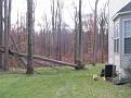 Tree Down (2)
