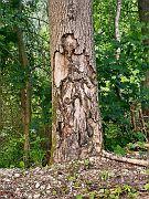 Ein Troll im Baum? :o)