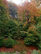 Lipper Wald
