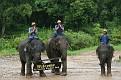 Mae Taeng Elephant Park Show (99)