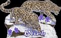 Barb Big Cats2