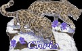 Chris Big Cats2