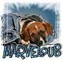 1Marvelous-blujeanpup