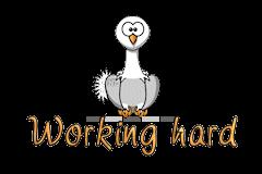 Working hard - OstrichWithBlinkie