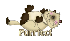 Purrfect - KittySitUps