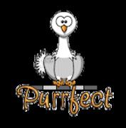 Purrfect - OstrichWithBlinkie