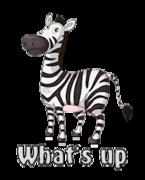What's up - DancingZebra