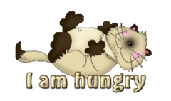 I am hungry - KittySitUps