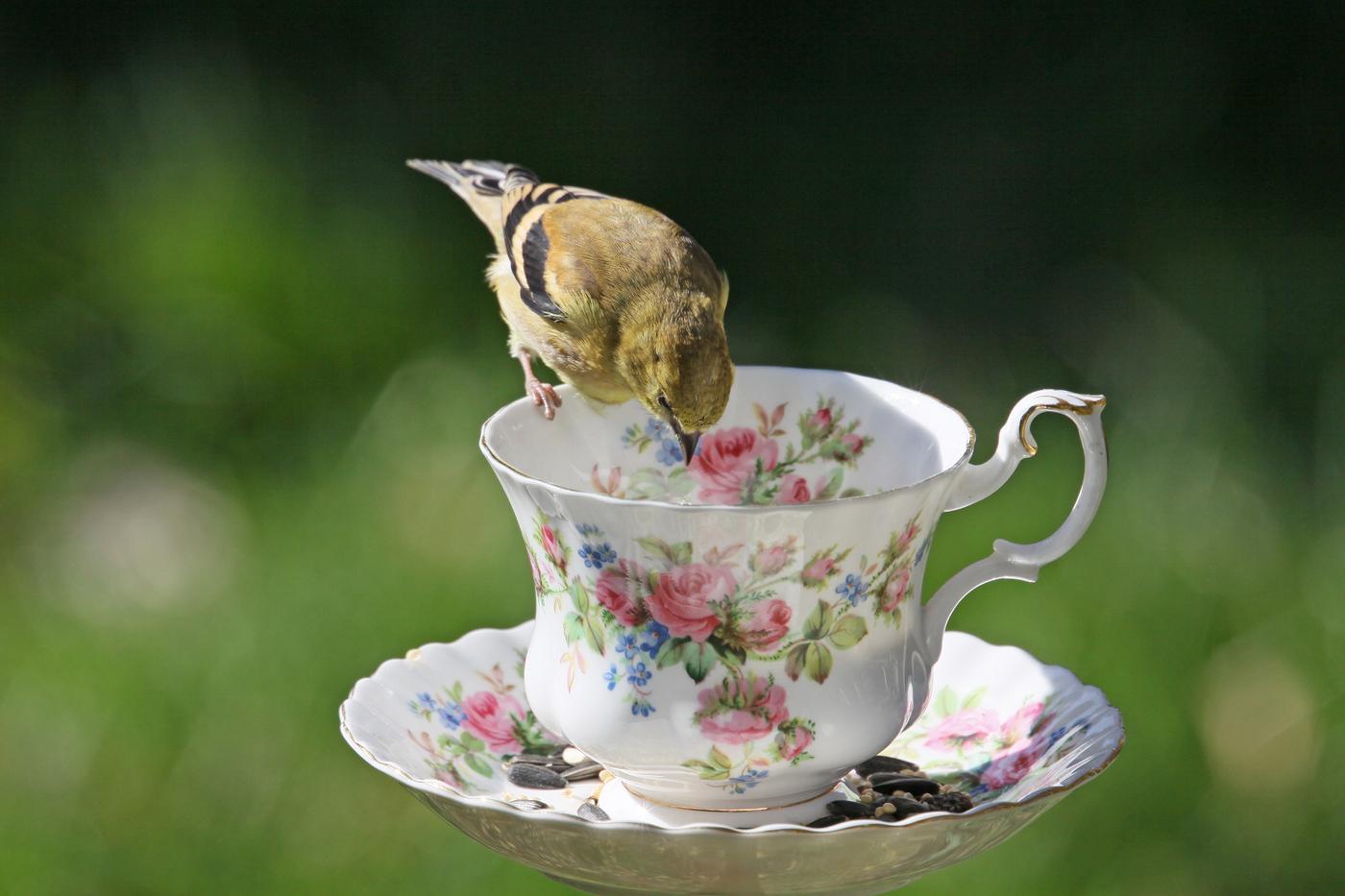 Goldfinch #3