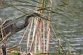 Heron Floating Island #10