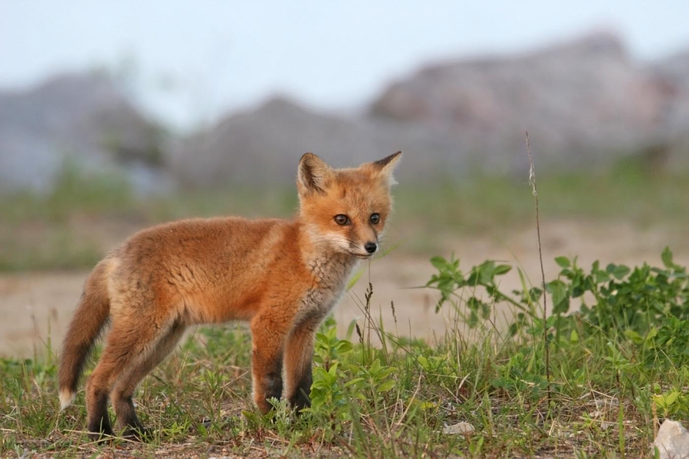 May Fox Series #8