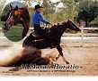 AL MARAH HORATIO+/ #490564 (AM Sea Captain++ x AM Wood Bridge, by IbnIndraff of AM) 1993 chestnut stallion bred by Al-Marah Arabians/ Bazy Tankersley
