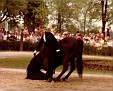 CASS OLE+ #54983 (Al-Marah Cassanova x La Bahia, by Hanrah) 1969 black stallion bred by Gerald Donoghue/ Donoghue Arabian Farm; sired 124 registered purebreds