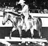 ANCHOR HILL ANNAH #59386 (Al Metrabbi++ x Anchor Hill Hannah, by Hadbah) 1969-1986 bay mare bred by Anchor Hill Arabians/ Dr & Mrs TE Atkinson; produced no registered purebreds