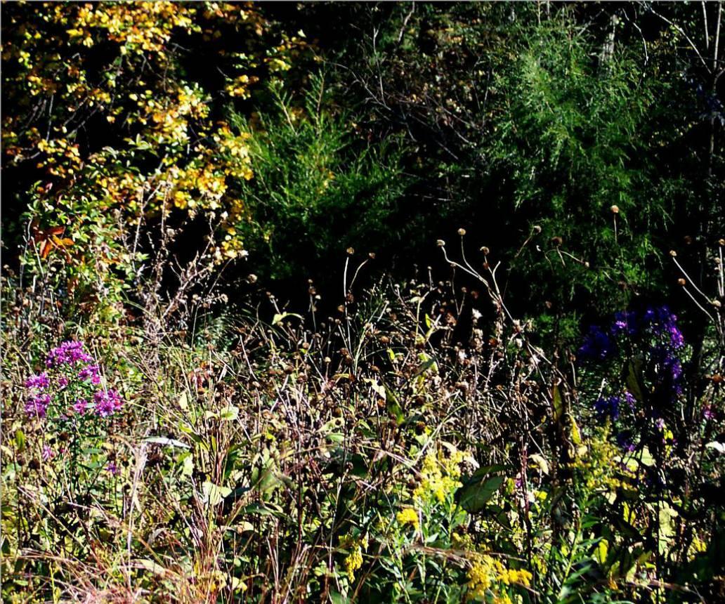 wildflowers 10 18 03 -2