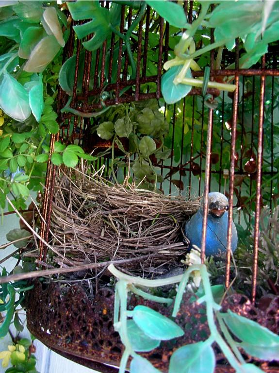 robin nest IMGP3914