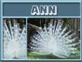 ann-gailz0304-albino peacock.jpg