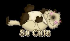 So Cute - KittySitUps