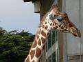 SF zoo 33